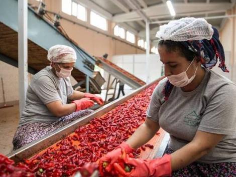 FAO: Az élelmezési rendszerek felelnek a károsanyag-kibocsátás jelentős részéért