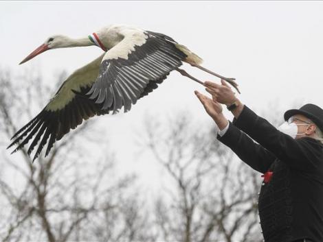 13 szerencsés gólyát engedtek ma szabadon – Képek