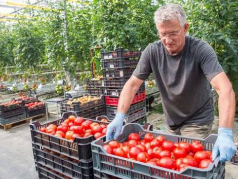 Berobban a magyar zöldség: áprilisra ezek a finomságok érkeznek