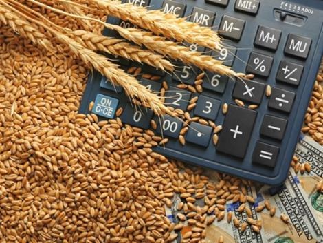 Nyomás alatt a gabonapiac – a bizonytalanság felfelé hajtja az árakat