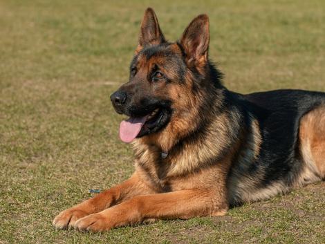 Súlyos hiányosságokat talált a Nébih egy kutyaszaporítónál, repült is a milliós bírság