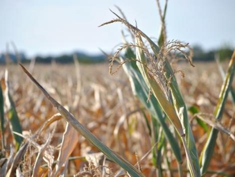 Felvehetik a kesztyűt a magyar gazdák: évente többszáz milliós kárt okoz a szélsőséges időjárás