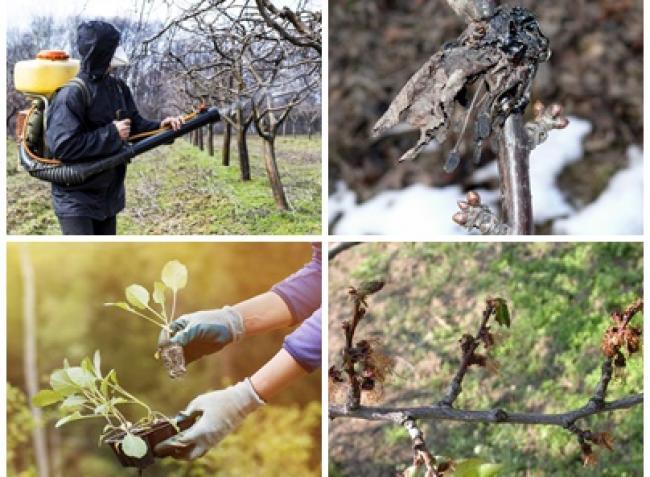 Mit vessünk a konyhakertbe, hogyan védjük meg a gyümölcsfákat, termesszünk-e bodzát?