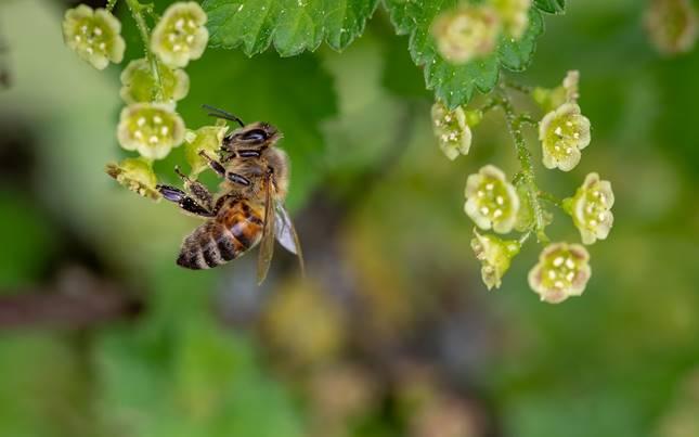 méh, rovarölő