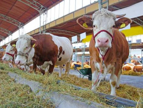A német állattartók istállólátogatásra hívják a fogyasztókat