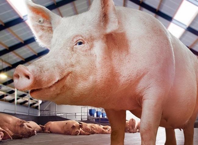 Változások az állatjelölésben?! Segítünk az ÁTK pályázatban is!