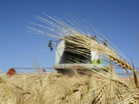 Durván felpörgette a gabona az agrárexportot