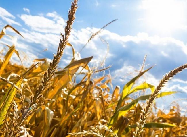 A klímaváltozás elől nincs menekvés! Hogyan befolyásolja a várható időjárás a terméskilátásokat?