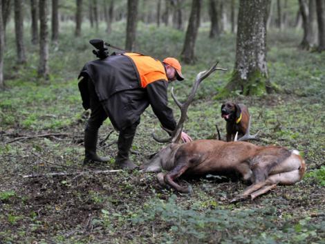 A koronavírus árnyékában egyre több engedéllyel rendelkező vadászból lesz orvvadász