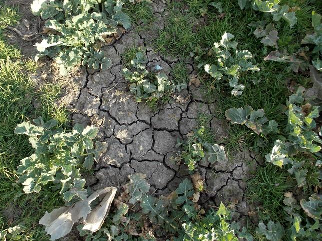 száraz talaj