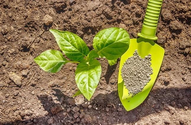 zöldség palánta ültetés