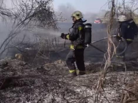 Két hektáron égett a nádas – videón a tűzoltók küzdelme a lángokkal