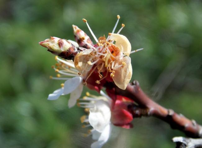 Növényvédelmi előrejelzés: Félő, hogy súlyos veszteséget szenvedtünk!