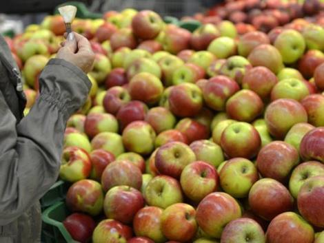 Aranyáron mérik a magyar almát – egy év alatt jelentősen megdrágult