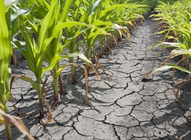 Őrült időjárással küzdenek a termelők – minden évben erre készüljünk?