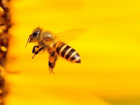 Egy új világ kapujában: a méhek megoldják a növényvédelmet!
