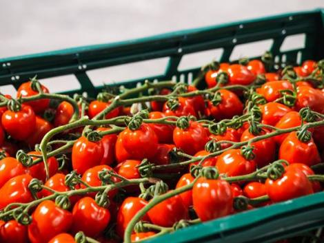 Megérkeztek a friss magyar zöldségek – ezekkel bővült a kínálat