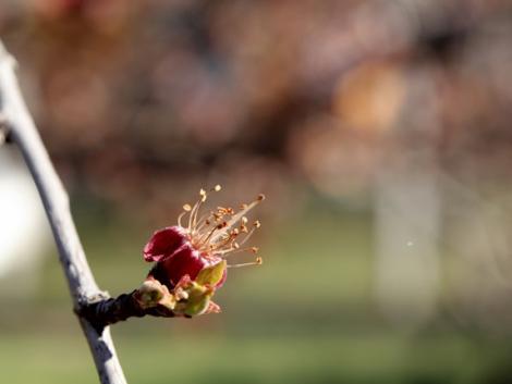 Sok gondot okozott az elmúlt egy hét időjárása a gazdáknak – mekkora a kár?