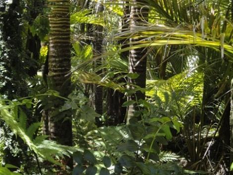 Történelmi csúcsot döntött az erdőirtás mérete