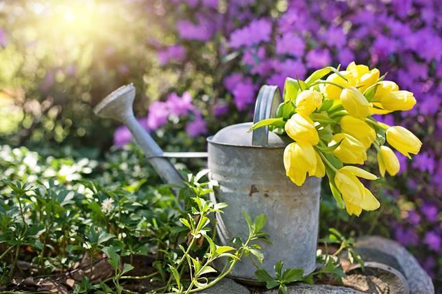 Tavaszi hagymás növények: tulipán, nárcisz, krókusz, jácint, császárkorona, kakasmandikó, csillagvirág, perzsa csillaghagyma, kockásliliom, hófény