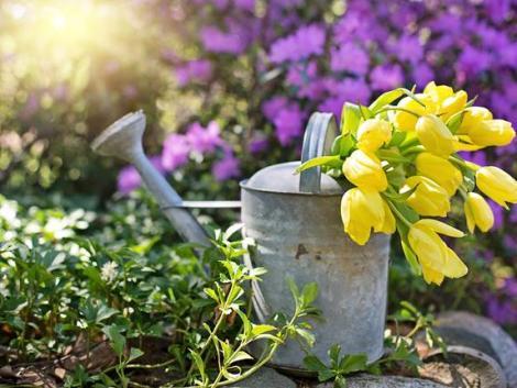 A tavasz slágernövényei, de sokan rosszul gondozzák őket – itt hibáznak