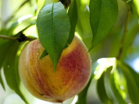 Lassan le kell mondanunk a hagyományos hazai gyümölcsfajtákról?