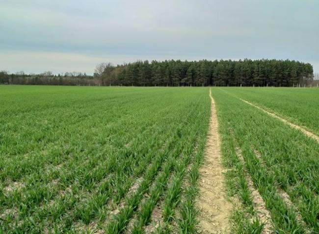 Őrségi gazdainterjú: Gyengébb talajokon gazdálkodsz? Ne csak a mennyiségre törekedj!