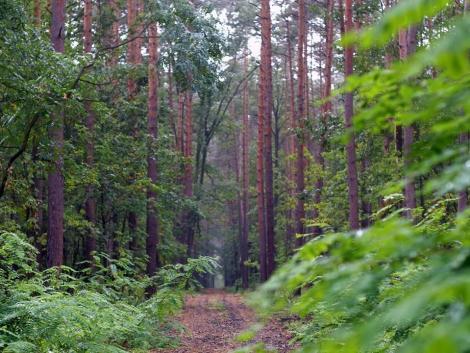 Az erdőket is fell kell készíteni a klímaváltozásra