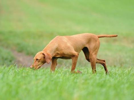 Póráz nélkül sétáltatott kutyák kergettek halálba egy lovat