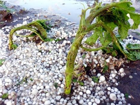 Változékony tavasz? Gondoskodjunk a tavaszi vetésű növények stresszkezeléséről!