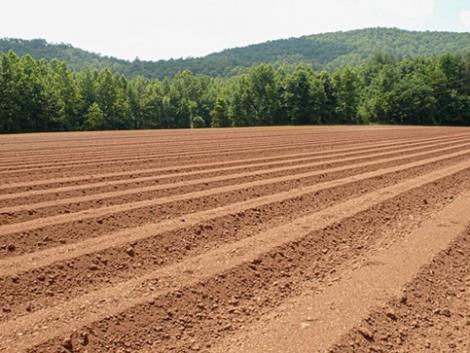 Mezővédő fásítással jelentős terméstöbbletre számíthatunk