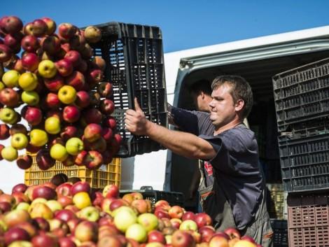 Hatalmasat drágul idén az alma, de a többi gyümölcs ára is nő