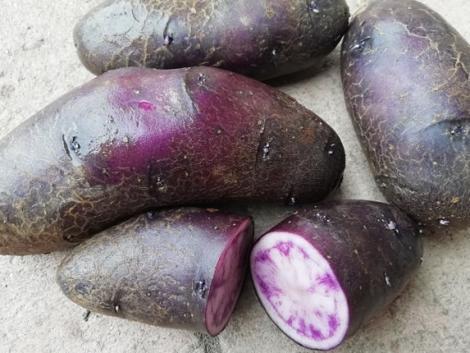 Bombabiztos tippek az otthoni krumplitermesztéshez