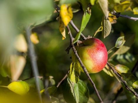 Akár 5000 hektár új ültetvény létrehozását is segítheti a támogatás