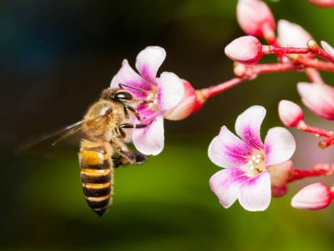 Évtizedek óta radioaktív mézet állítanak elő sugárfertőzött méhek
