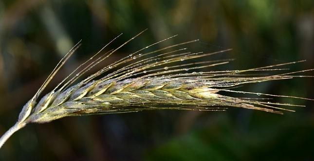 mezőgazdasági pályázat