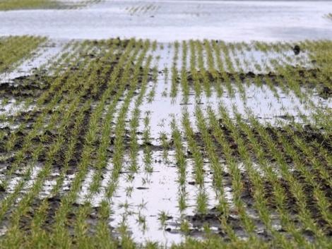 Növénybiztosítás: Igényeljen vissza akár 65% támogatást az AXIÁL-lal!