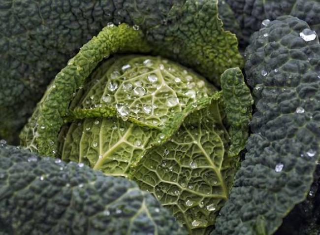 Idén is milliónyian termelnek zöldséget a saját kertjükben