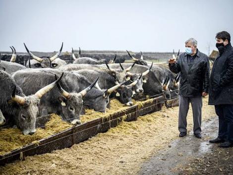 Milliárdok az élelmiszeriparnak – több ütemben pályázhatnak az üzemek
