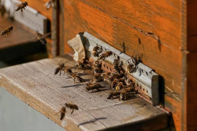eltűnnek a méhek