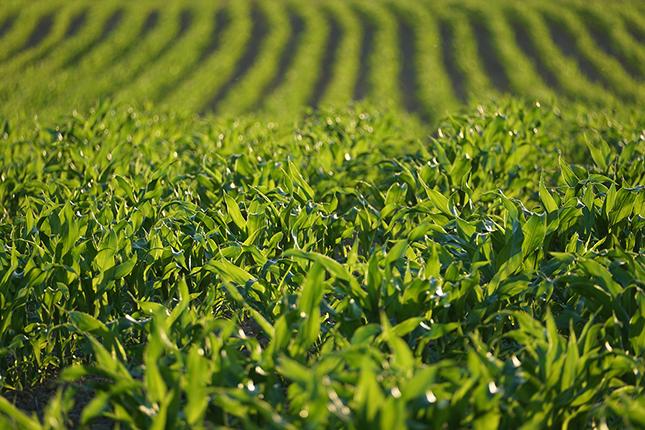 növényvédelem