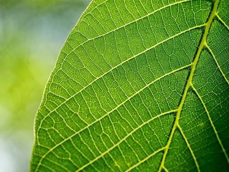 Levélanalízises kezeléssel hozhatja ki a legtöbbet növényeiből!