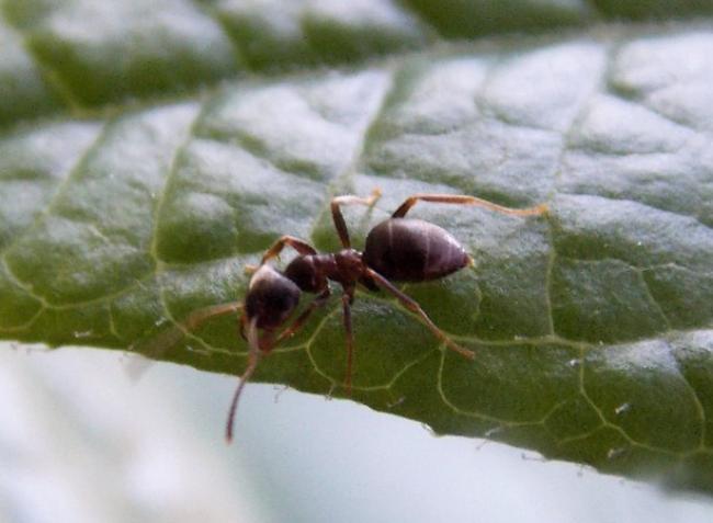 Ellepték a növényeimet a hangyák! Mit tegyek?