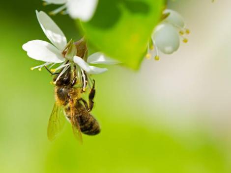 Különleges segítség a magyar méhészeknek!