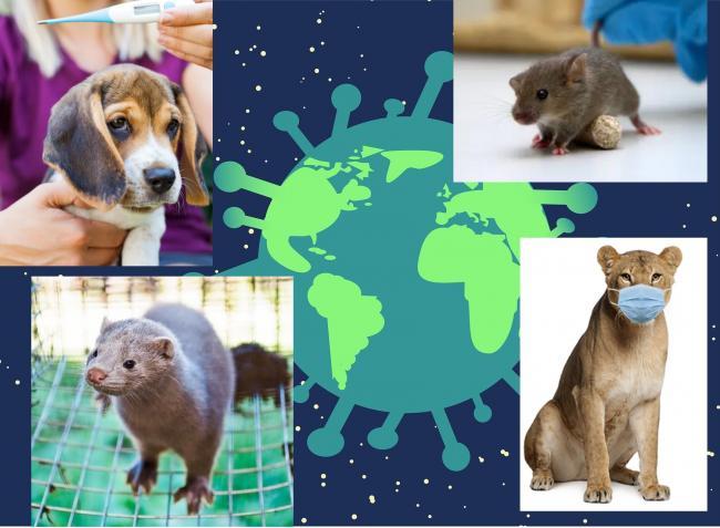 Elérhető az orosz Covid-19 vakcina állatoknak! – Ezeket tudnod kell és jó, ha betartod állattartóként!