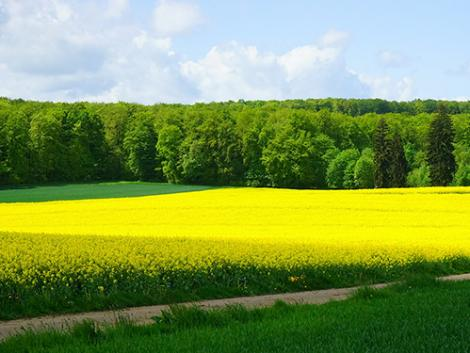 8 meglepő változás a magyar mezőgazdaság elmúlt 10 évében