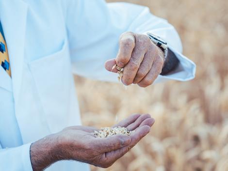 A kérdés, ami felboríthatja a teljes gabona-átvételi folyamatot