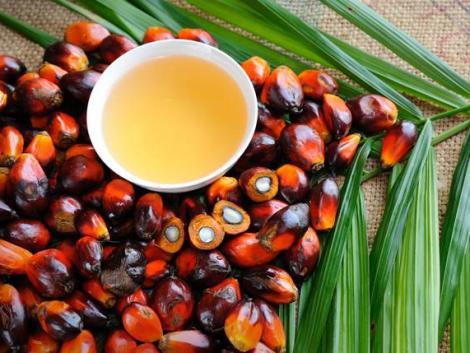 Rengeteg pálmaolajat fogyasztunk és nem is tudunk róla