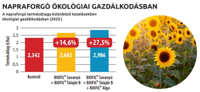 Napraforgó ökológiai gazdaságban diagram