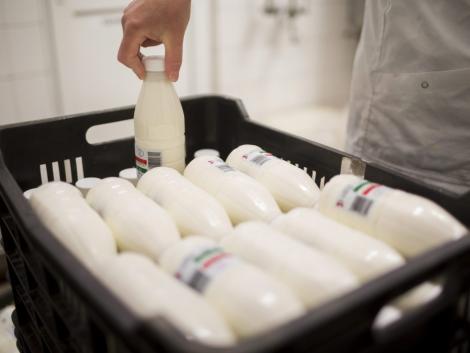 Több milliárdos állami támogatással fejlesztett a magyar tejipar legnagyobb vállalata